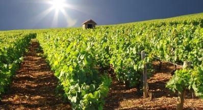 Dom. de BEL AIR, Beaujolais-Burgund