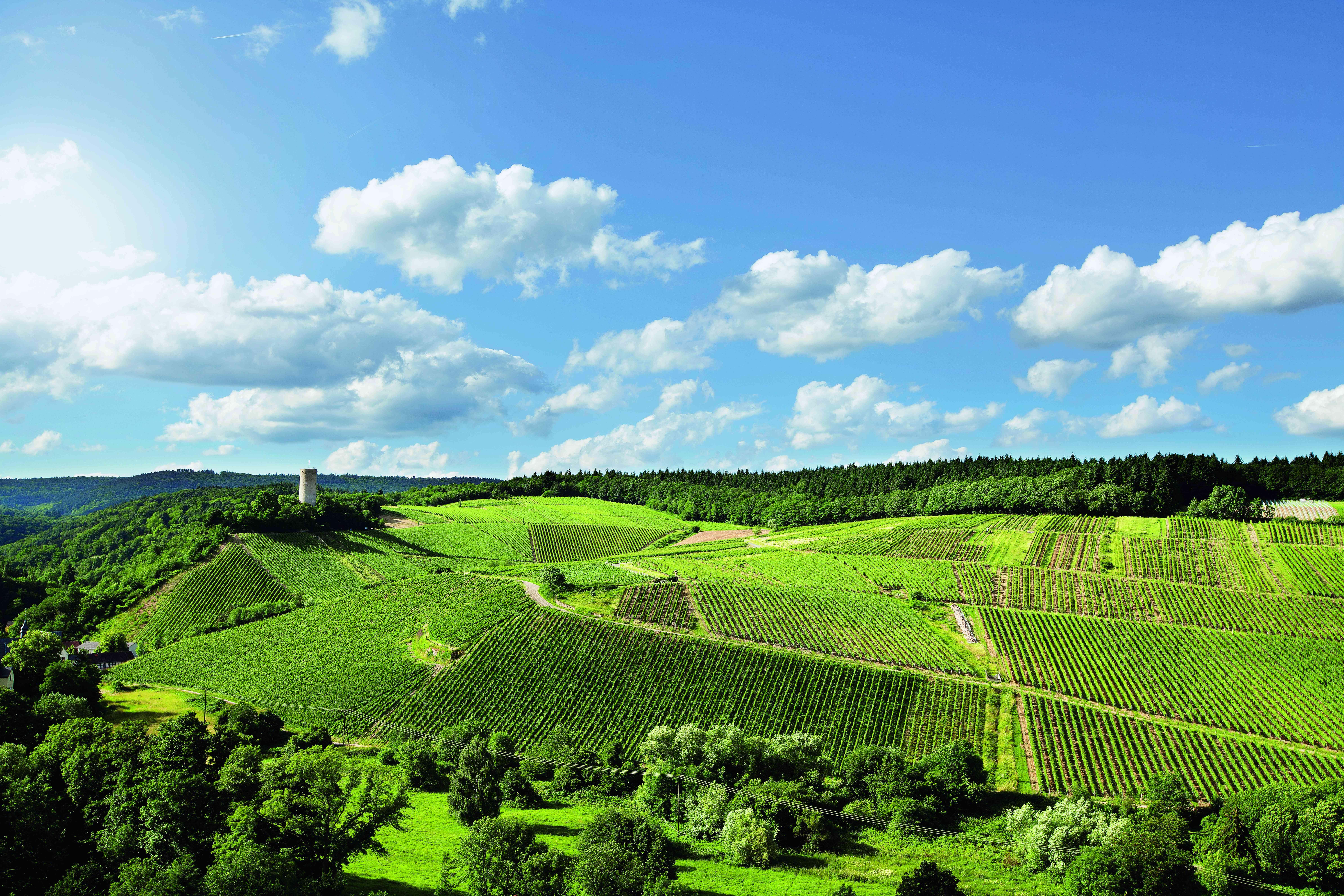 WEIL, Rheingau